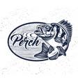 eurasian river perch fishperch fishing club vector image vector image