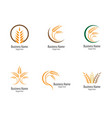 agriculture wheat logo template vector image vector image