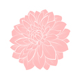 dahlia flower isolated on white vector image vector image