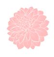 dahlia flower isolated on white vector image