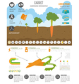Gardening work farming infographic Carrot Graphic vector image