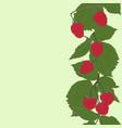 raspberries vertical seamless pattern vector image vector image
