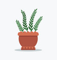 rosemary planted in flower pot vector image vector image