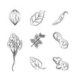 herbs and spices icons vector image vector image