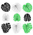 monstera leaves set vector image vector image