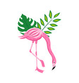 pink flamingo with green tropical leaves isolated vector image vector image