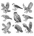 set realistic birds goshawk griffon vulture vector image