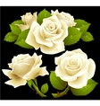 White roses set vector image vector image