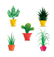 collection room plants in pots vector image