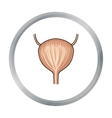 Human urinary bladder icon in cartoon style vector image vector image