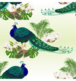 seamless texture peacock beauty exotic bird vector image vector image