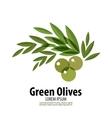 Green Olives logo design template harvest or food vector image