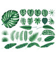 detailed tropical leaves and plants collection vector image vector image