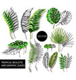 tropical realistic and graphic leaves elements vector image vector image