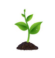 green sprout with white background vector image vector image