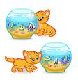 kitten walking around aquarium vector image