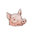 severed pink pig head isolated on white background vector image vector image
