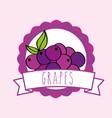 fresh grapes natural fruit organic emblem design vector image