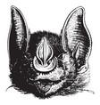 javelin bat vintage vector image vector image