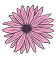 pink gerbera drawing by hand vector image vector image