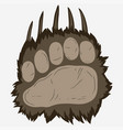 bear footprint grizzly paw print vector image vector image