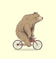 bear is riding a bicycle vector image vector image