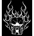 bull dog flame tattoo in black background vector image vector image