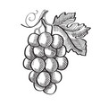 engraving fresh fruit template vector image vector image