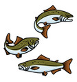 set of colorful salmon fish sign on white vector image
