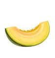 slice melon fruit vector image vector image