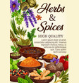 spices culinary herbs condiments and seasonings vector image vector image