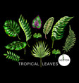 tropical palm monstera banana and fern vector image