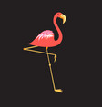 a beautiful red flamingo vector image vector image