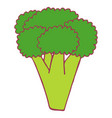isolated flat broccoli vector image vector image