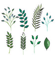 leafs plant set vintage icons vector image