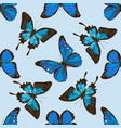 seamless pattern with hand drawn colored blue vector image vector image