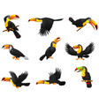 set of toucans cartoon vector image vector image