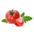 tomato with segment vector image vector image