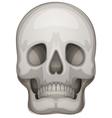 A human skull vector image vector image