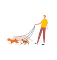 funny guy holding pack dogs on leash vector image vector image