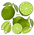 Lime Isolated vector image vector image