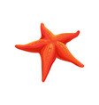 starfish sea creature on a vector image