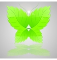 Butterfly from green leaves vector image