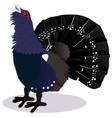 capercaillie bird vector image vector image