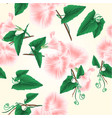 seamless texture morning glory pink vector image vector image