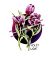striped tulip in pink and purple light vector image