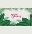 summer tropical foliage calathea ornata leaves vector image