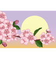 Apricot blossoming branch vector image