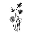isolated blooming meadow flower form print natural vector image