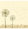 vintage dandelions vector image